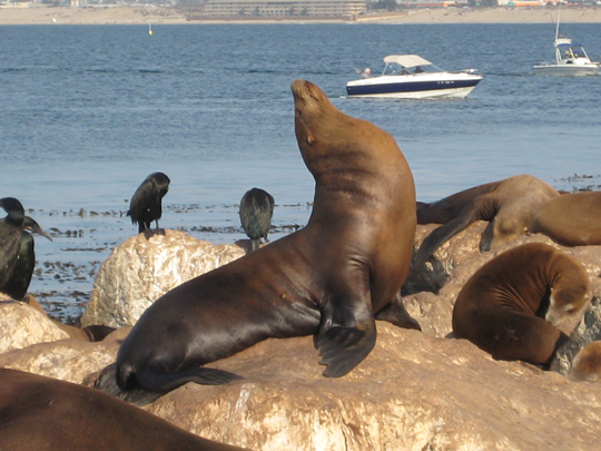 Monterey Bay animals