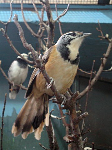 Beijing Zoo bird