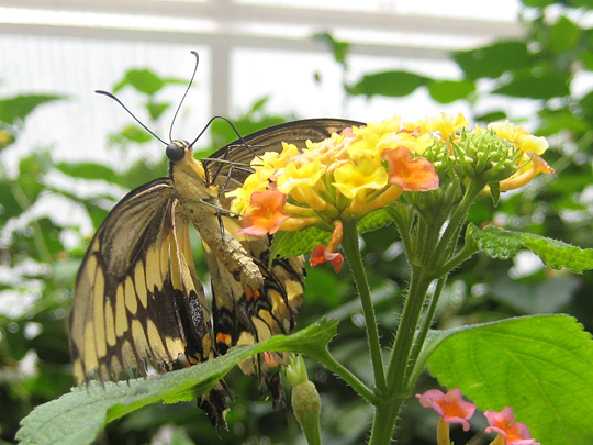 Butterflies from the Bronx Zoo